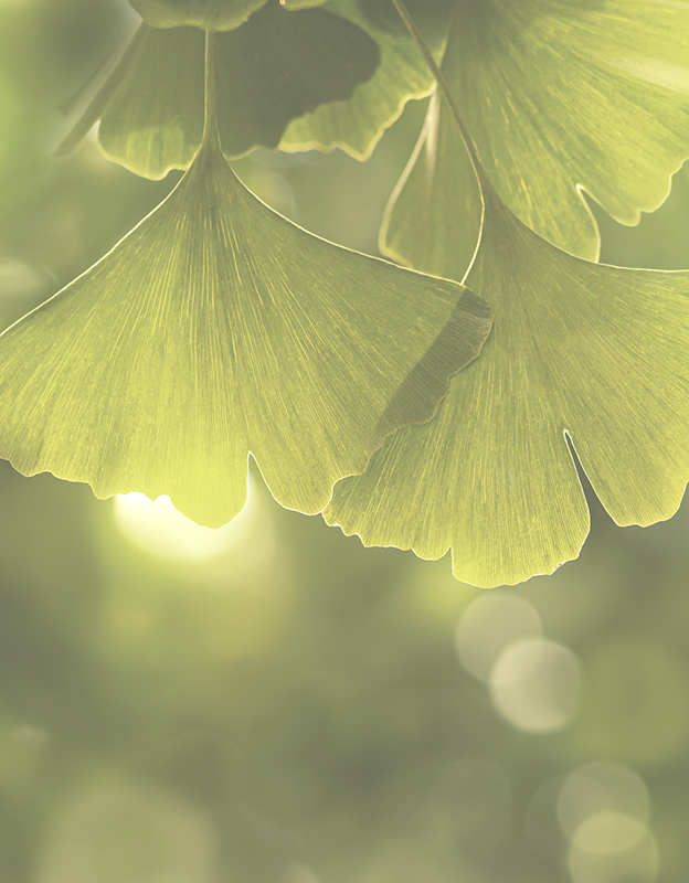 Ginko biloba (maidenhair tree) extract <br> - due to its multi-directional properties it is a valuable ingredient in cosmetics. Not only does it have a soothing and protective effect on the skin and blood vessels, but also stimulates blood circulation and stimulates deep cellular reconstruction. Its antioxidant effect translates into intensive neutralization of free radicals during sleep.